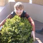 В Яндексе много зеленых растений